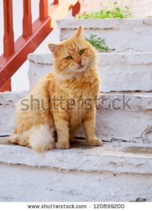 stock-photo-red-cat-sitting-on-the-stairs-120899200